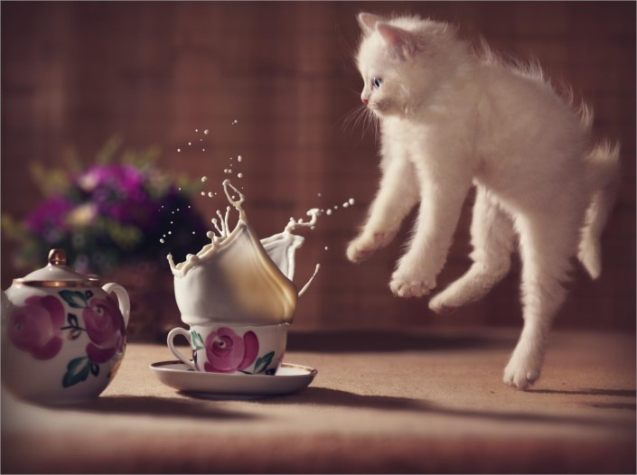 funny-cat-that-hot-tea-can-burn-my-skin-635803142476085694-17463.jpg